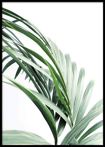 Palm Tree Leaves Close Up Plakat i gruppen Plakater / Botaniske hos Desenio AB (10244)