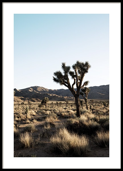 Joshua Tree National Park Plakat i gruppen Studio Collections / Studio Coast to Coast / Palm Springs hos Desenio AB (10798)