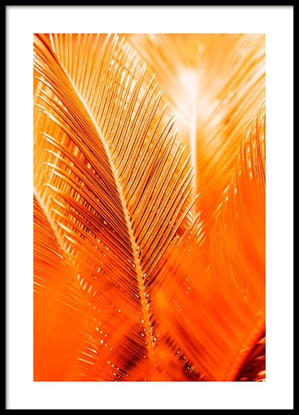 Orange and Gold Palm Plakat i gruppen Plakater / Botaniske hos Desenio AB (12403)