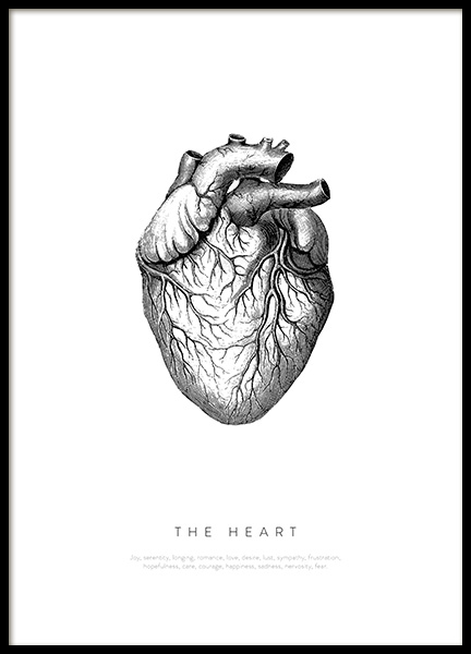 Anatomy of the Heart Plakat i gruppen Plakater / Illustrasjoner hos Desenio AB (13730)