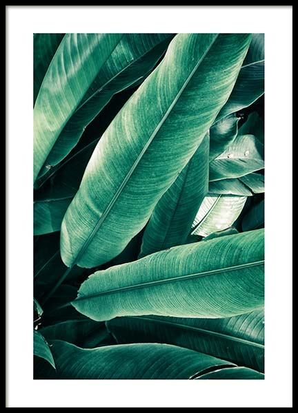 Banana Leaves Close Up Plakat i gruppen Plakater / Botaniske hos Desenio AB (3549)