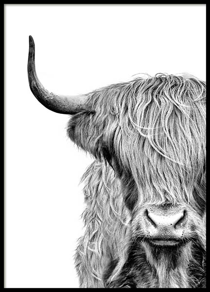 Highland Cow Close Up Plakat i gruppen Plakater / Insekter & dyr hos Desenio AB (3638)