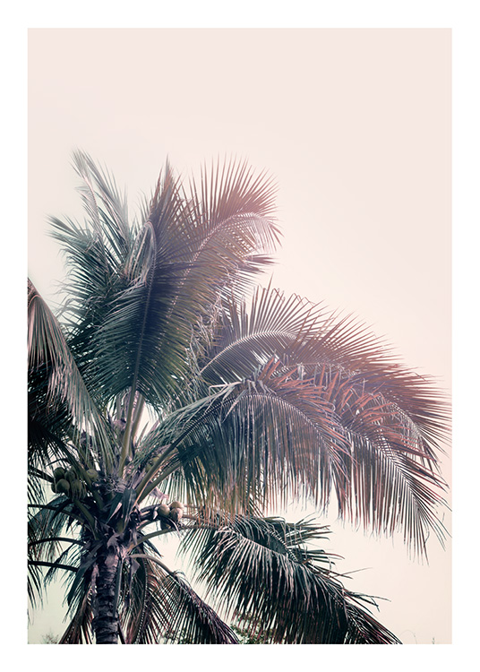 A Palm Tree Dream Plakat / Palmer hos Desenio AB (10169)