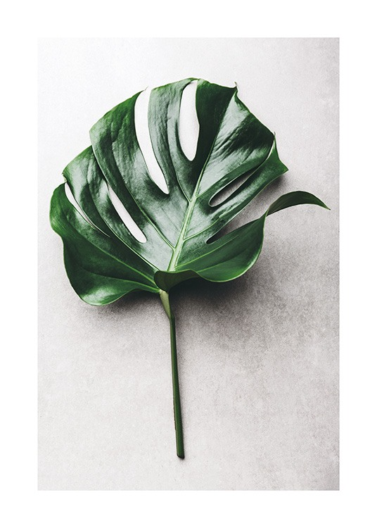 Green Monstera Leaf No1 Plakat / Fotokunst hos Desenio AB (12050)