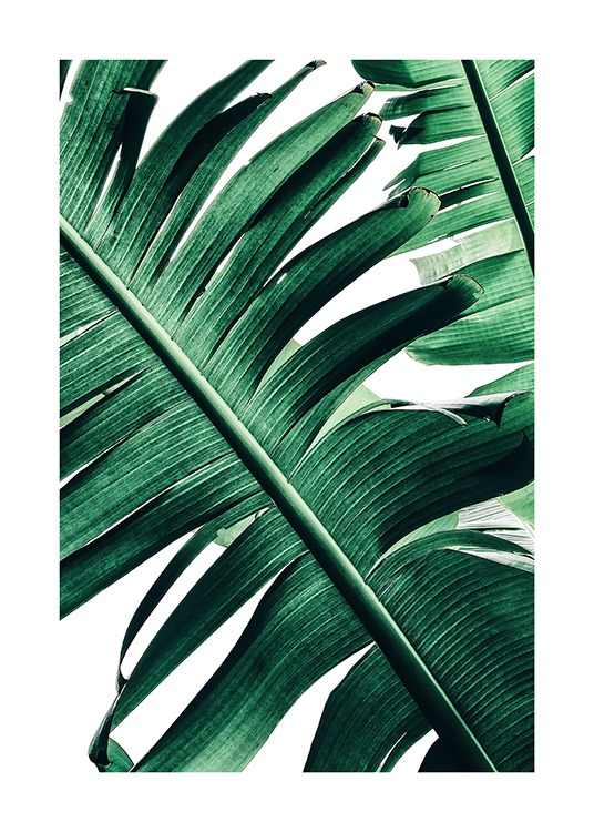 Banana Palm Leaves No2 Plakat / Fotokunst hos Desenio AB (12053)