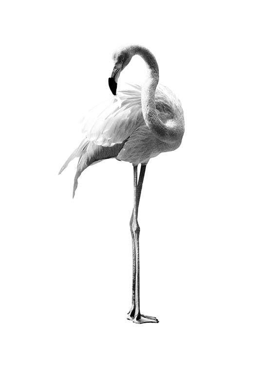 Flamingo Black And White Plakat / Svarthvitt hos Desenio AB (2395)